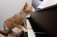Round of a-paws: Animal carers believe the six-year-old moggie - who was found in a garden - craves pushing his paws on the keys because the sound helps connect him to the outside world