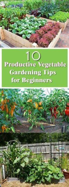 Vegetable Garden Design, Ideas, Tips and Planting