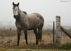 horse and fence... by Allyeska, via Flickr