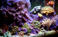 tashayar - 2008 Featured Nano Reefs - Featured Aquariums - Monthly Featured Nano Reef Aquarium Profiles - Nano-Reef.com Forums #aquarium