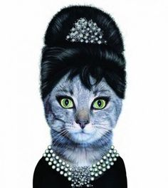 Cat! Cat! Oh, Cat... Celebrities Pet Look Alike   Creative Greed