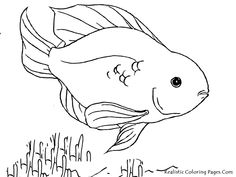 Cool Kids Colouring Pagess Of Fish