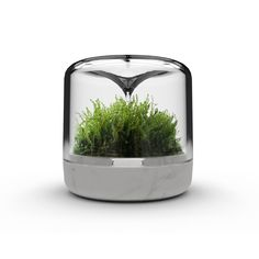 Sanctuary Small is the original mossarium by Botanica. Grow moss in the perfect environment, at work or at home.