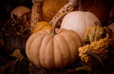Pumpkin Display | Photo by Shannon Kunkle | PhotoSkunk | Flickr