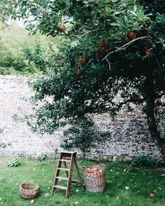Abbie Mellé (Photographer): Apples
