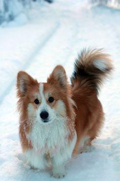 Like a little fox!!!