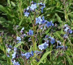 Bijen Eénjarige bloemen - Imkerij De Werkbij