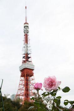 Rose and Tokyo Tower バラと東京タワー tokyotower 東京タワー 東京 タワー tower tokyo landscape バラ 薔薇 rose