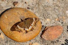 #PhotoOfTheDay by #MarkdeScande #Butterfly #VanStadensFlowerReserve #SouthAfrica