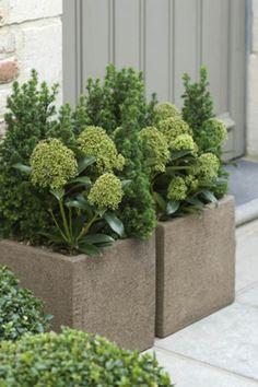 top 10 des plantes pour jardini res d 39 hiver jardin hiver femmes d 39 aujourd 39 hui jardin en. Black Bedroom Furniture Sets. Home Design Ideas
