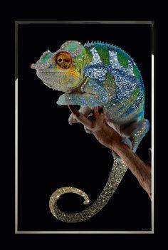 Michele Astolfi, Chameleon, plexiglass, Swarovski, Mother of pearl, steel, 110 x 170 cm
