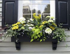 Amazing window box with yellow flowers. Yellow calla lilies hydrangeas sweet potato vine yellow and white easy planting show stopper warm and cool climates sun shade