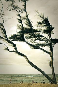 Quand le vent souffle...