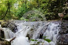 Photo about Pacefull place in forest, place o scilence. Image of travel, flowing, tree - 89698096 Vectors, Waterfall, Sign, Stock Photos, Places, Nature, Free, Travel, Outdoor