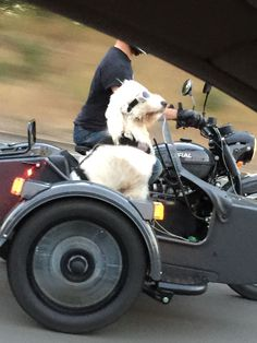 Discover more about motorcycle camping gear articles Check the webpage for more … – Best Motorcycles Ural Motorcycle, Motorcycle Camping, Camping Gear, Pet Transport, Best Friends For Life, Dog Fence, Dog Travel, Vintage Bikes, Car Wheels