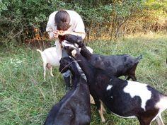 Carmel Corn, Goats, Animals, Food, Animales, Meal, Animaux, Essen, Hoods