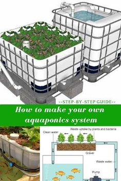 How To Build An Aquaponics System. Aquaponics' principles are simple: you grow fish in a tank, proliferate the plant seeds, care for them during their development period and in less than one year harvest your own crops. Aquaponics System, Aquaponics Greenhouse, Aquaponics Fish, Fish Farming, Hydroponic Gardening, Organic Gardening, Vertical Farming, Urban Gardening, Urban Farming