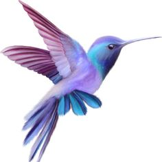 Colorful bird clipart 64 New Ideas Hummingbird Pictures, Hummingbird Art, Hummingbird Tattoo Watercolor, Vogel Tattoo, Bird Clipart, Diy Tattoo, Tattoo Bird, Bird Drawings, Cute Birds