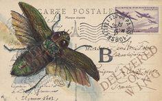arte postal Maryjo Koch