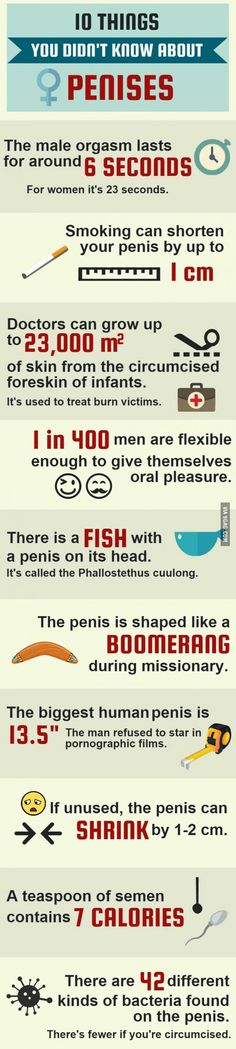 10 things you didn't know about penises.