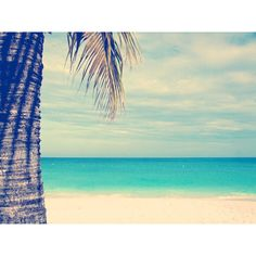 Ocean Photograph, Palm tree photo, teal blue, sand, clouds, beach... (€18) ❤ liked on Polyvore featuring backgrounds, pictures, icons and random