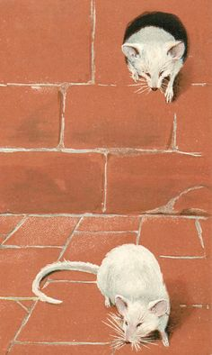 Postcard - Two mice, one on floor, the other climbing out of hole - 1903 - via TuckDB