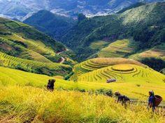 Sapa, Vietnam. Layers of land, cool air, beautiful colors, mountain backdrop