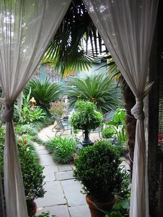 Simple knotted curtains in this home work well despite their simplicity. Serve as a division between indoor and outdoor spaces. It frames the view of the tropical garden. Great garden for a small area. Outdoor Curtains, Outdoor Rooms, Outdoor Gardens, Outdoor Living, Outdoor Decor, Hang Curtains, White Curtains, Outdoor Ideas, Tropical Landscaping