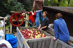 Boy Scouts make fresh-pressed apple cider during the annual Boone Heritage Festival.