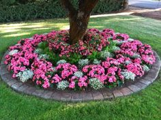 Others , Creating Enchanting Focal Points For Gardens By Making Circular Colorful Flower Bed : Enchanted Flower Bed Around The Tree With Pretty Pink And Wjite Flower Combination