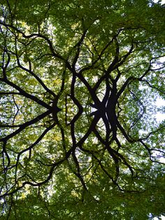 branches, symmetry, distorted nature, mirror, light, reflection