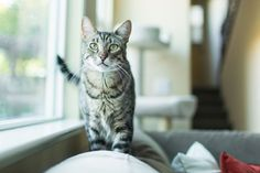 Cat Talk: Understanding How Cats Communicate by Using Their Ears