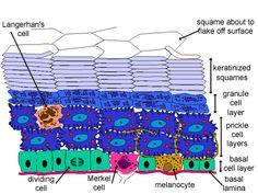 histology website