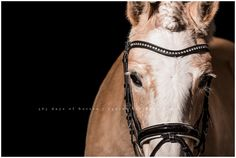 Austin Equine Photographer