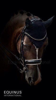 Valegro Bay Black Dutch Warmblood Horse Dressage Bridle Fly Bonnet Veil Face Stallion Gelding Mare