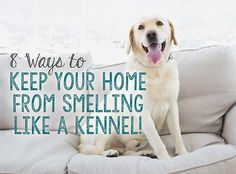 Fresh and clean isn't always the first way people will describe a home with a dog. Let's face it, that wiggly-bottomed, waggy-tailed, much-loved pooch can make a mess and leave a good trail of odors that. Dog Smells, Indoor Pets, Pet Odors, Dog Hacks, Dog Houses, House Dog, Diy Stuffed Animals, New Puppy, Training Your Dog