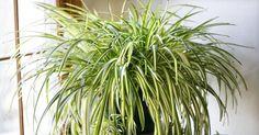 9 απίστευτα φυτά που καθαρίζουν τον αέρα καλύτερα από κάθε συσκευή που μπορεί να αγοράσετε   Τι λες τώρα;