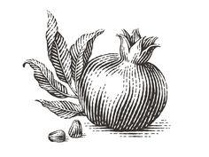 Fruit Illustration Logo Behance New Ideas Art And Illustration, Engraving Illustration, Ink Illustrations, Botanical Illustration, Pomegranate Art, Pomegranate Tattoo, Lino Art, Scratchboard, Black And White Drawing