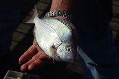 Tirar cheiro de peixe das mãos e da cozinha - Almanaque Culinário