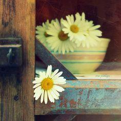 <3   bowl of daisies