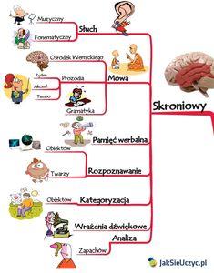 Co każdy powinien wiedzieć o mózgu, aby uczyć efektywniej?