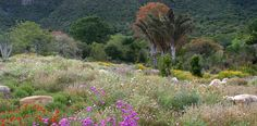 The Kirstenbosch Botanical Gardens in Cape Town – South African Tourism Bring a blanket and some wine!