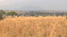 Kidepo Game Safari  Uganda