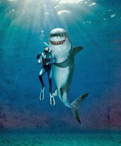 Discover the best destinations for diving or swimming with whale sharks. Our advice, information on diving with whale sharks. See also all dive sites, dive centers and destinations for diving with whale sharks and more. Shark Week, Funny Animals, Cute Animals, Shark Bait, Shark Swimming, Great White Shark, Ocean Creatures, Sea Monsters, Wow Art