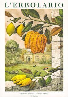 Calendario 1999: L'Erbolario ci sorprende con gli acquerelli di Franco Testa ispirati dai grandi illustratori botanici del passato