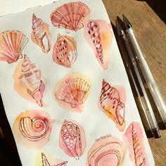 Uniball pen drawing over watercolor wash shells painting / illustration.... Ohn Mar Win (@ohn_mar_win) on Instagram