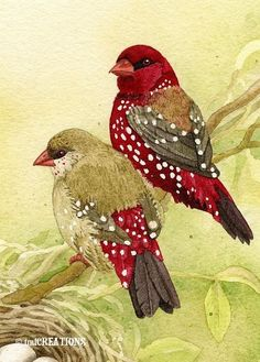 Im delighted to introduce the Finch family. They are expecting any day now! This is an archival fine art giclee print of the original watercolor painting. TITLE: The Finch Family ARTIST: Tracy Lizotte SIZE: x image on 8 x paper Pretty Birds, Beautiful Birds, Watercolor Bird, Watercolor Paintings, Colorful Birds, Bird Art, Painting & Drawing, Illustration Art, Drawings
