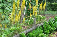 Some good tips on starting a garden...but never use Gurney's or Burpee.