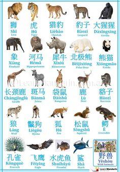 Animal names in Chinese, with pinyin Mandarin Lessons, Learn Mandarin, Chinese Phrases, Chinese Words, Mandarin Characters, Chinese Flashcards, Learn Chinese Characters, Mandarin Language, Chinese Lessons