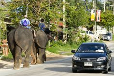 Elephant and car traffic on street!!! Thailand.